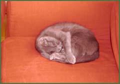 macska fotelben